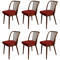 Very Rare Set of Six Dining Chairs by Antonin Suman for Jinota Sobeslav
