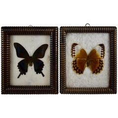 Victorian Bobbin Turned Framed Taxidermy, Mounted Butterflies on Batting, a Pair
