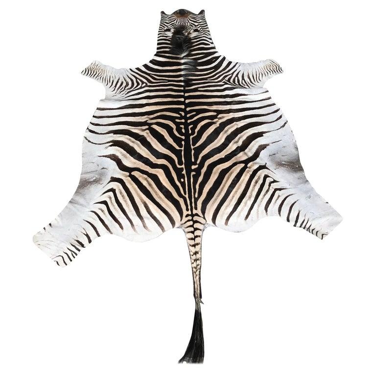 Superb quality Burchell Zebra Skin