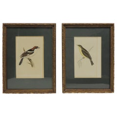 Pair of Vintage Steel Hand Engraved Bird Pictures