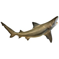 Lifelike Replica of a Small Shark