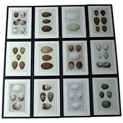 Group of 12 Framed Chromolithographs of British Birds' Eggs, Henry Seebohm, 1896