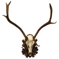 Austrian Deer Antler Mount on Black Forest Carved Wood Plaque