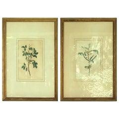 Two Audubon Framed Bird Engravings, circa 1827, Tennessee & Children's Warbler