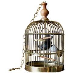 Bird Taxidermy European Starling, Sturnus Vulgaris Antique Brass Birdcage