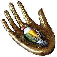 Colorful Bird Taxidermy Lady Gouldian Finch 'Erythrura Gouldiae' Gilded Hand