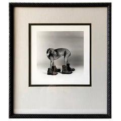 William Wegman Silver Print Photograph Dog Wearing Boots, 1988