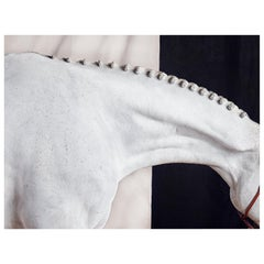 Titan Neck I from Horse Series, Small Size Color Photograph