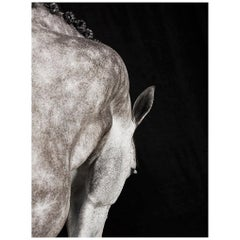 """Lines. Crawssina"", Horse Series, Small Color Photograph, 2016"