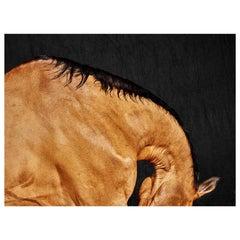 'Barla Neck', Horse Series, Small Color Photograph, 2016