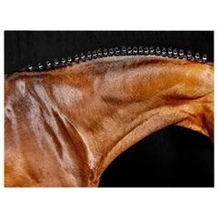 'Orbetello Neck', Horse Series Color Photograph