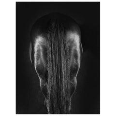 Horse Series, Large Color Photograph