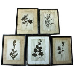 Group of Five-Framed French Collected Wild Flower Botanical Specimens