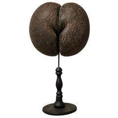 20th Century Coco de Mer/Coco de Fesses/Seychelles Nut