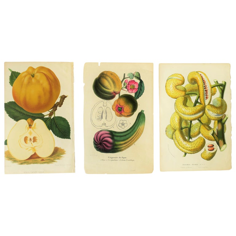 European Botanical Wall Art Prints, Late 19th Century