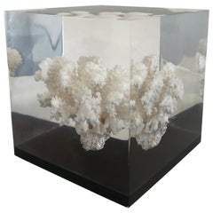 Large Coral Specimen Sculpture in Lucite Block, 1970s