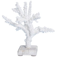 Branch Coral Sculpture on Coquina Stone