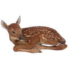 Deer Fawn Taxidermy