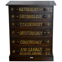 Small Natural History Collectors Cabinet, Drawers by A W Gamage Ltd