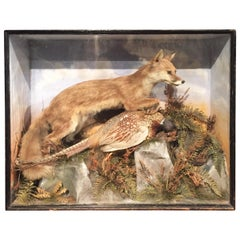 Taxidermy Study of a Fox and Pheasant by Ecutt and Crabtree