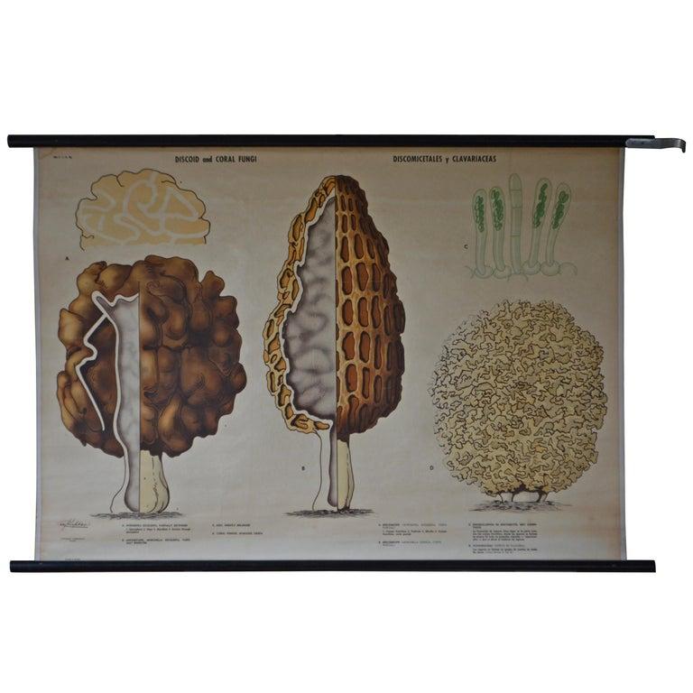 Swedish Schoolroom Poster of Fungus Forms 'Aka Mushrooms'