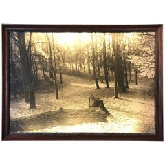 Vintage Black and White Forest Landscape Lightbox