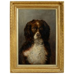 English School - Portrait of a Cocker Spaniel