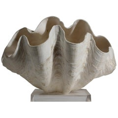 Double Matching Tridacna Gigas Clam Shell on Lucite Base Nautical Sculpture