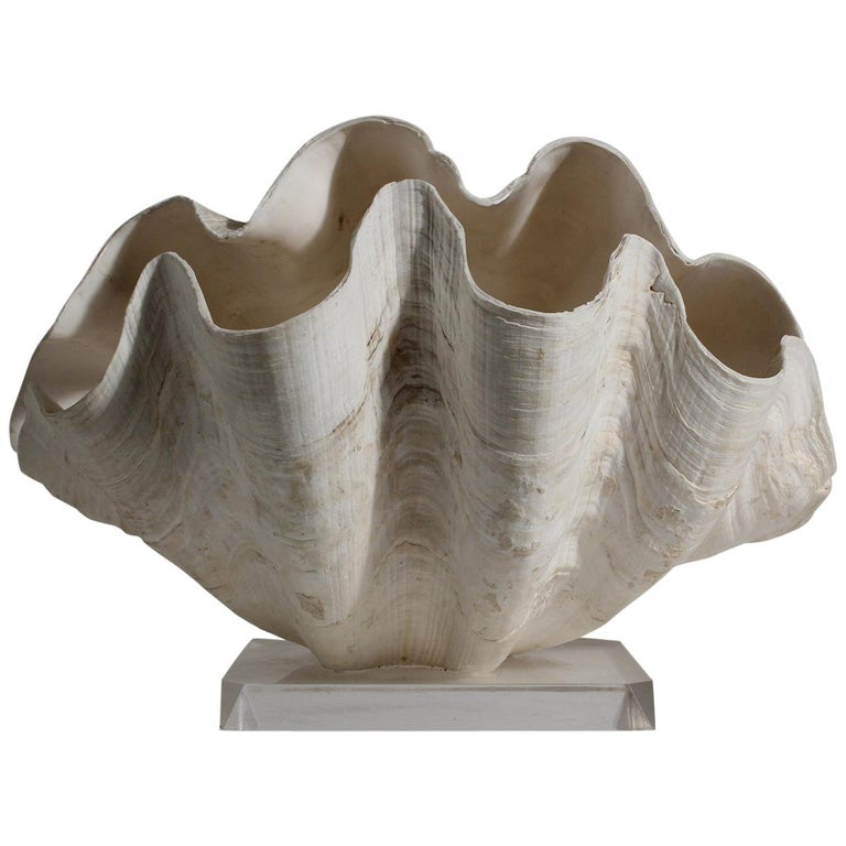 Double Matching Tridacna Gigas Clam Shell on Lucite Base Nautical Sculpture For Sale