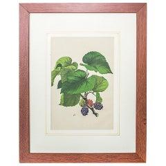 20th Century Colorful Graphic/Blackberries