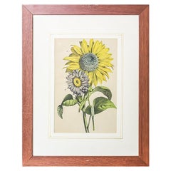 20th Century Colorful Graphic/Sunflowers