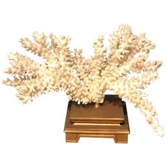 Specimen Blanc Long Branch Coral, Mounted