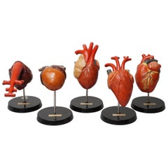 Five 1950s German Anatomical VEB SVL Models of Animal Hearts
