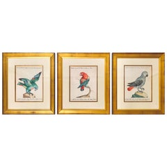 18th Century Set of 3 Italian Engravings of Parrots by Saverio Manetti