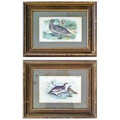 Pair of 19th Century Bird Chromolithograph Prints by Wyman
