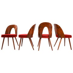 Four Walnut Tatra Chairs by Antonin Suman in Original Upholstery, 1960s