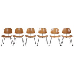 Set of Six matched and early Charles Eames DCM Dining Chairs for Herman Miller