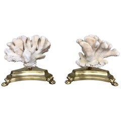 Pair of Natural White Specimen Coral on Antique Italian Bronze Bases