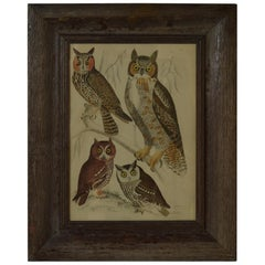 Original Antique Print of Owls, 1835