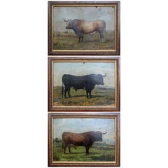 1883 Set of Three Oil on Canvas Bull Portraits by Luis Juliá Carrere