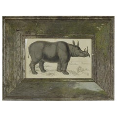Original Antique Print of a Rhinoceros, 1837