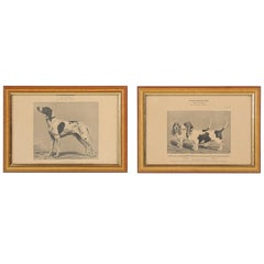 Pair of French Dog Prints, Early 1900s from Paris