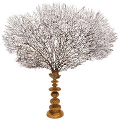 Giant Black Sea Fan Mounted on a Large Turned Wooden Base