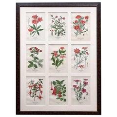 Framed Set of Nine 1890s Edward Step Flower Chromolithograph Prints