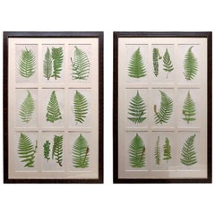 Set of 18 Framed Hand Colored Ferns by E.J Lowe