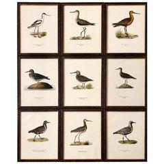 Set of Nine 1920s Swedish Framed Chromolithographs of Water Birds