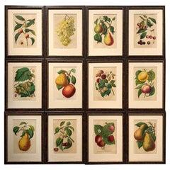 Set of Twelve 19th Century Chromolithographs of Fruits