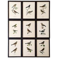 Set of Nine 1920s Swedish Chromolithographs of Pairs of Small Birds