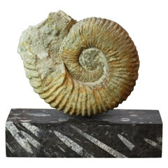 Ammonite Fossil on a Rectangular Fossil Base