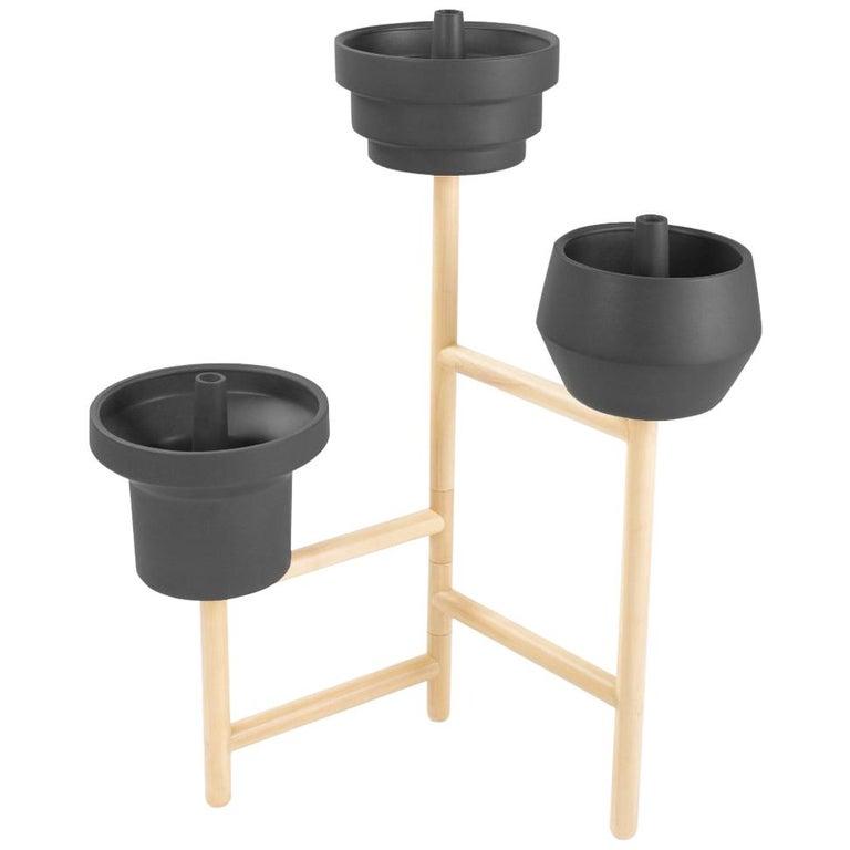 Trinum Plant Pot Set with Oak Base For Sale